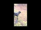 Adopt Boxer Mix Sam - Oasis Animal Rescue