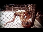 UFC 150: Henderson vs Edgar Preview