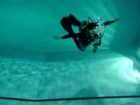 MARINE DIVERS (BSAC) - HONG KONG - TYLER BARTH - BACKWARD ROLL 4