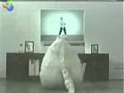 Dance Cat WTF Boom !!!