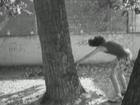 Trailer del primer sampler bazo carlos y riki